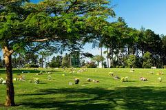 Coroas de Flores Cemitério Parque dos Pinheiros – SP