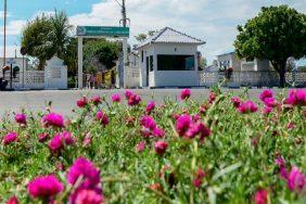 Coroas de Flores Cemitério Nossa Senhora da Conceição