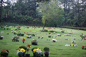 Coroa de Flores Cemitério Municipal Rincão – SP